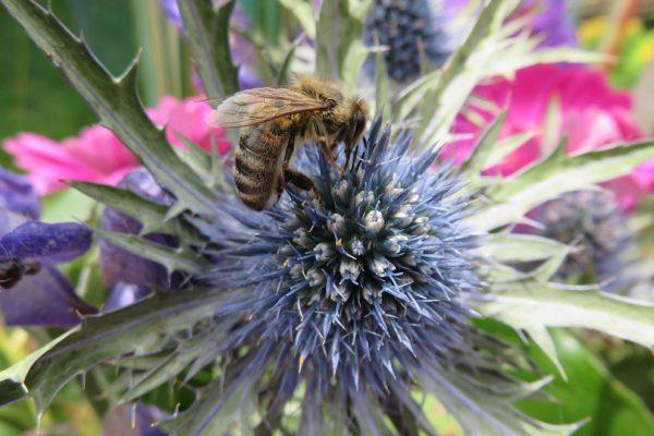Bijen terug in Biest-Houtakker